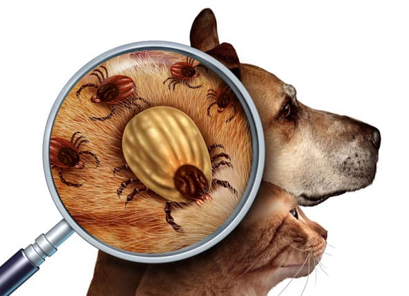 Tick Treatment Perfection Lawn Care